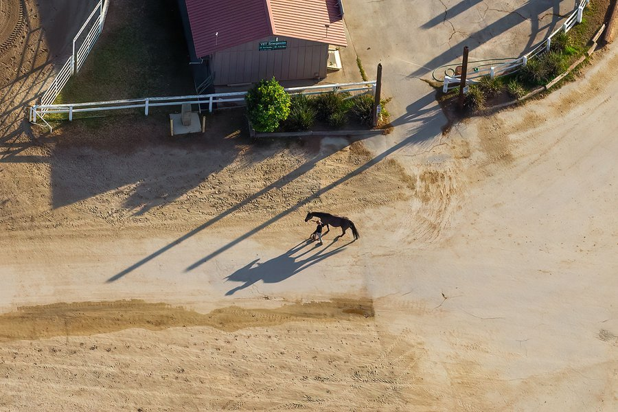 Blog image of a horse and trainer at the Calamigos Equestrian Center in Burbank, California on Christmas Day 2020.
